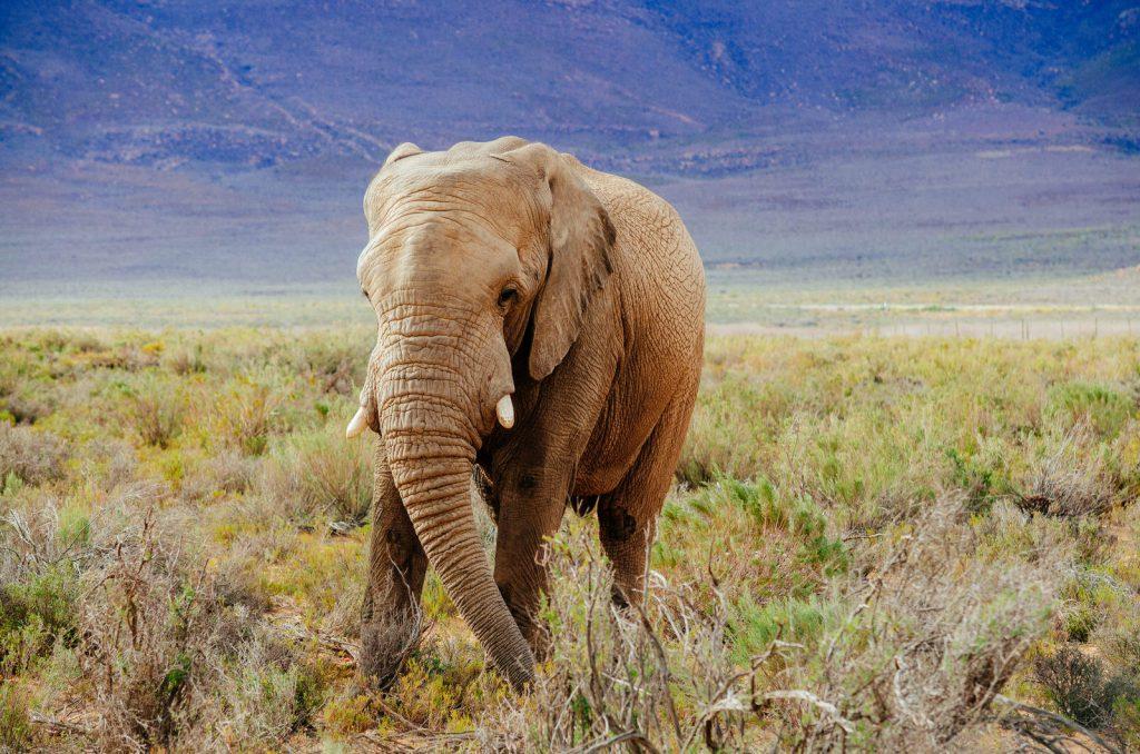 Sudafrica Natura Kiwi The Explorer 22