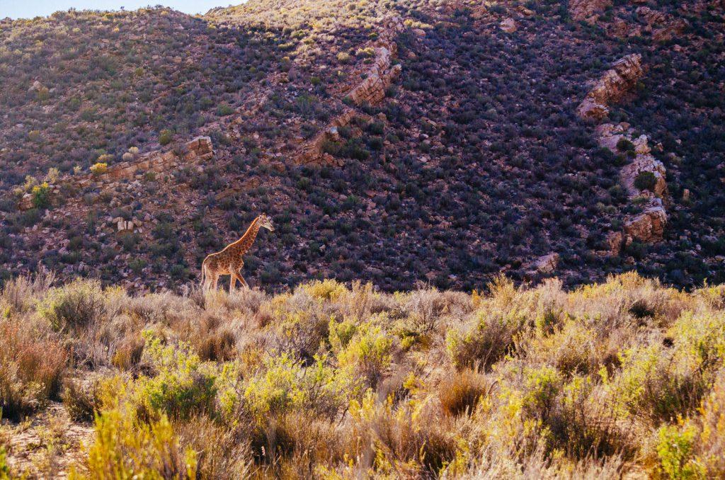 Sudafrica Natura Kiwi The Explorer 43