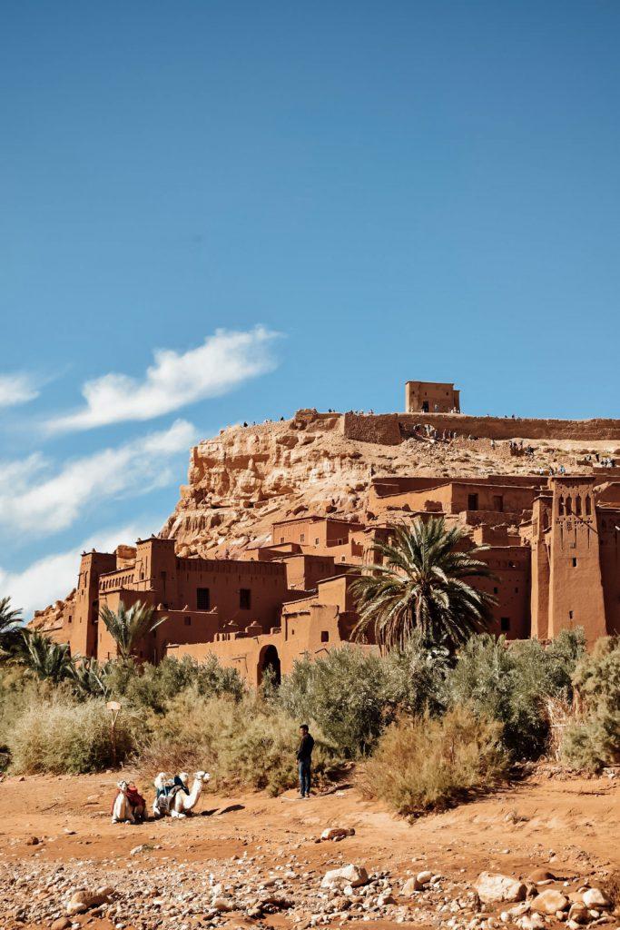 Kiwi The Explorer Beatrice Bono Marrakech Cosa Vedere 19
