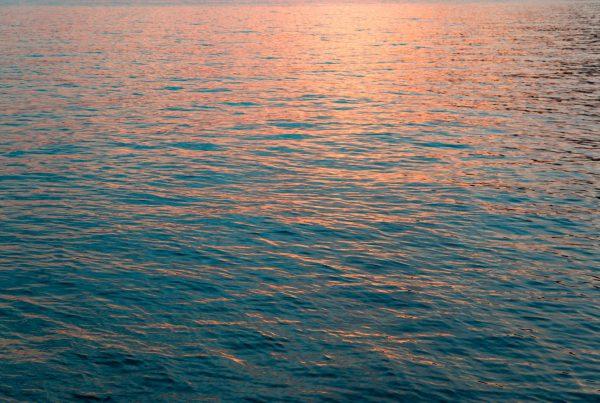 Kiwi The Explorer Pesca Sostenibile 8